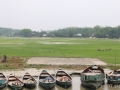 boats-bangladesh-field