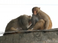 monkeysnearshop